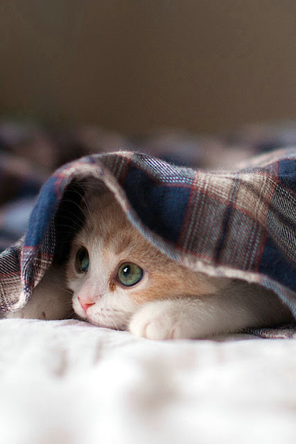 5 Ways To Prep Your Cat For Warmer Weather