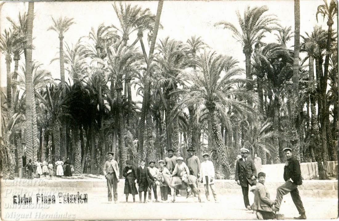 Image of the Palmeral of Elche, one century ago