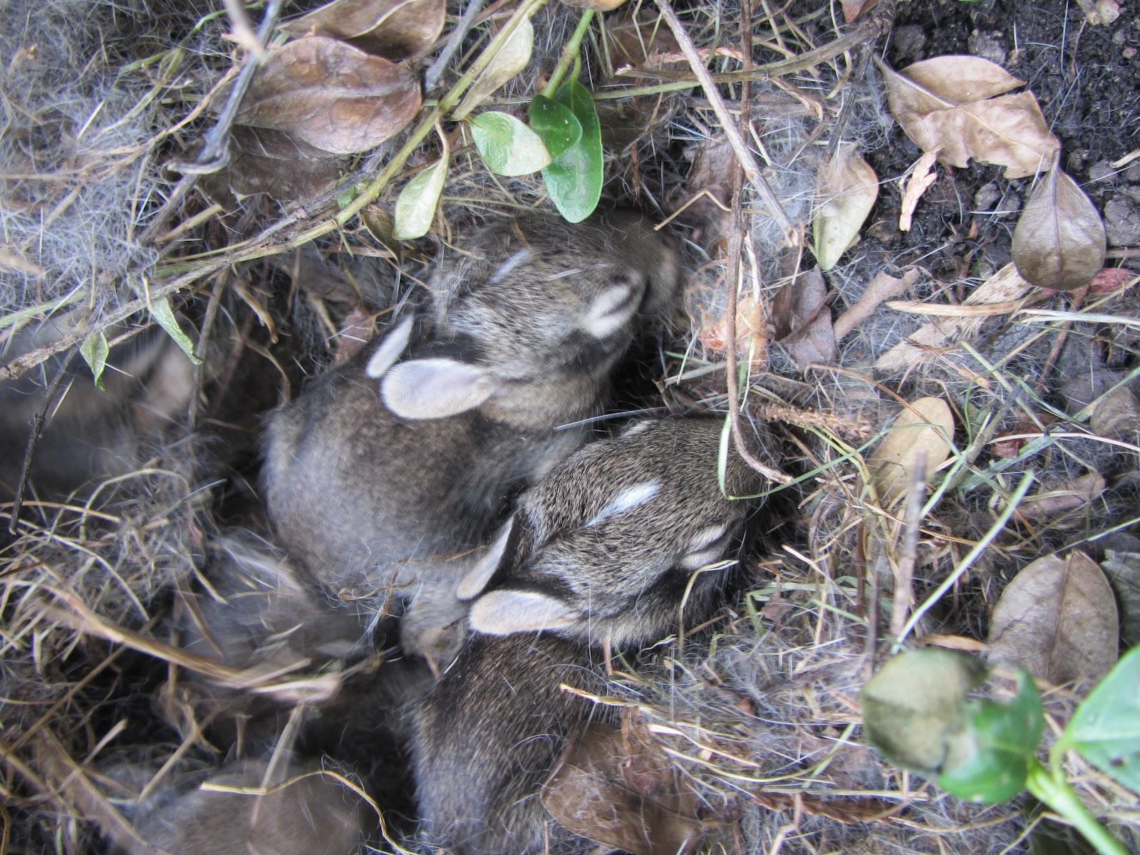 paper cut screams by cheryl baby bunnies in my backyard
