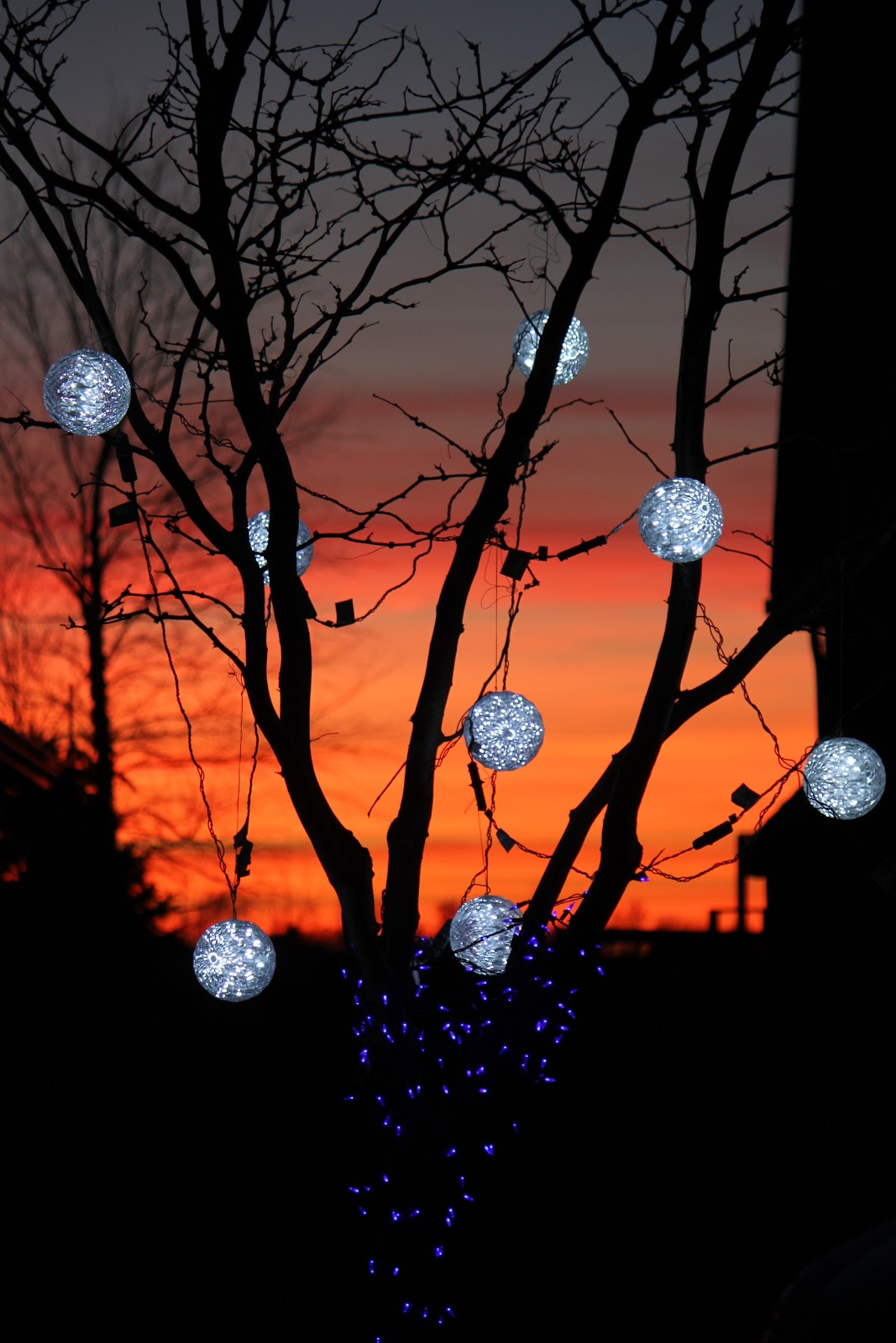 Outdoor-Christmas-Lighted-Balls-On-Tree