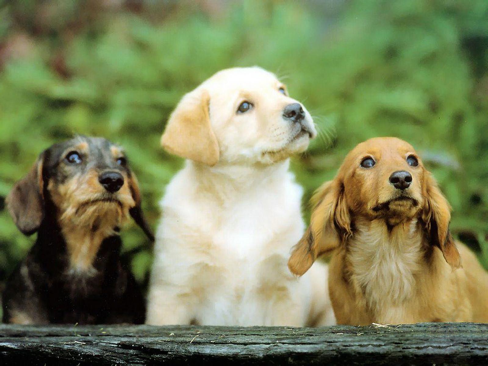 http://3.bp.blogspot.com/-z7r_9CHjrdA/Tyw8CXPuk7I/AAAAAAAAA10/J9mSNHzX0A0/s1600/10-Cute+Dog+1600x1200.jpg