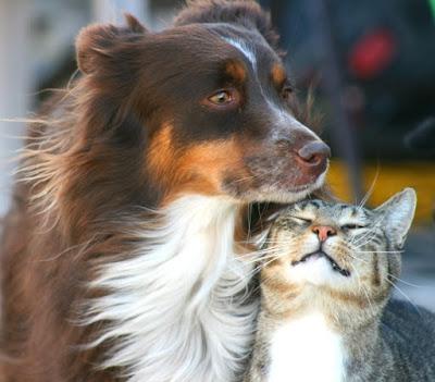 cat and dog hugs