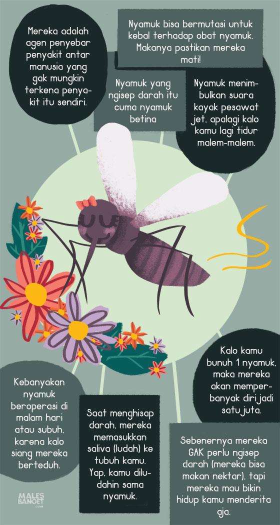 fakta unik tentang nyamuk - munsypedia.blogspot.com