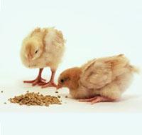 Thức ăn bổ sung trong chăn nuôi, liên quan tới vấn đề VSATTP.