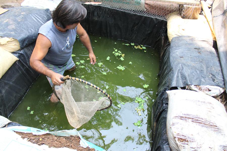 Unbound comunicaciones guatemala padre guatemalteco for Criar tilapias en estanques