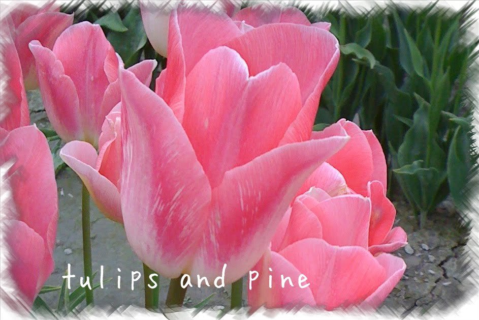 tulips and pine