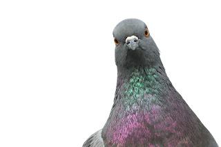 DrBird+-+iStock_000010241833Medium.jpg