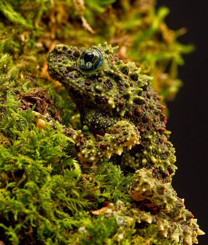 Mossy Throats, The* Mossy Throats - Microbe Shower