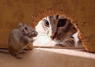 Il gatto e i topi (Esopo)