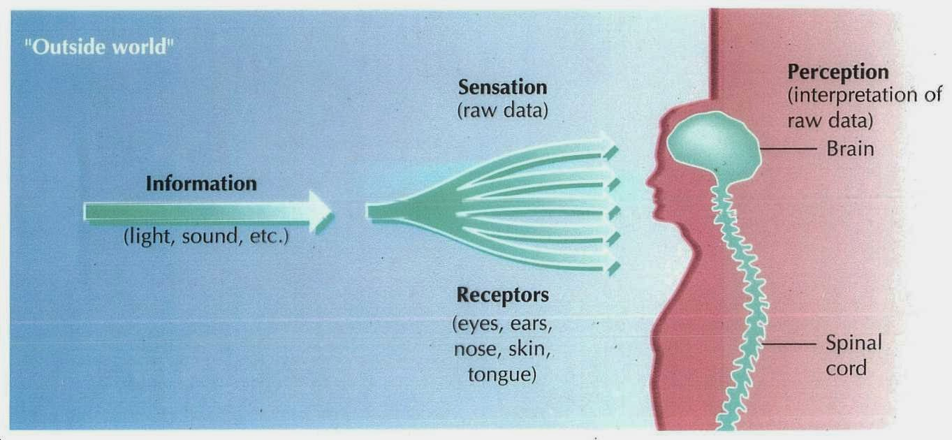 an analysis of sensation and perception Perception definition is  then there was an analysis published last year showing novartis ranked 14th among  some sensation of perception of the extremity after.
