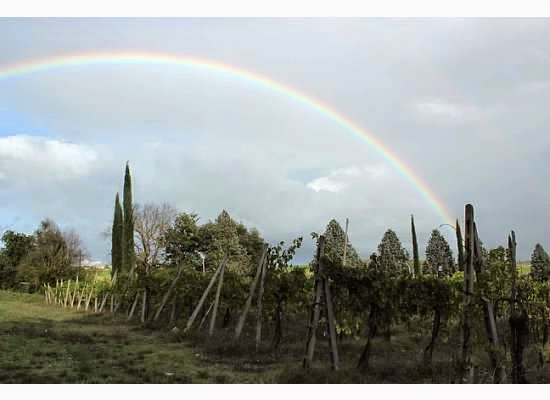orvieto vineyards and wines