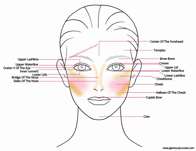Face Anatomy For Makeup Understanding Technical Terms Of
