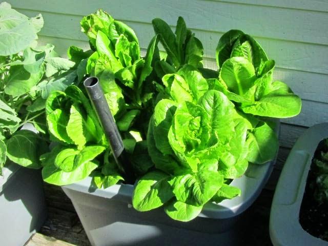Bin Gardening