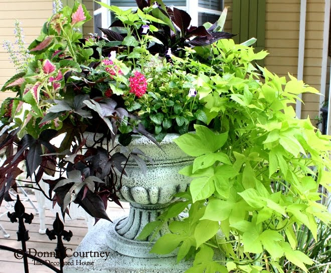 The decorated house june white flower pots with lots for Garden arrangement of plants