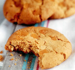ginger cookies: classic cookies (biscuits) with stem ginger baked into the dough