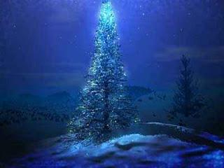 Arbol de navidad real iluminado