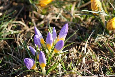 primavara spring primavera fruehling tavasz becHa voorjaar bahar