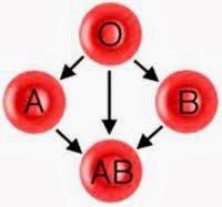 tips hamil berdasar golongan darah