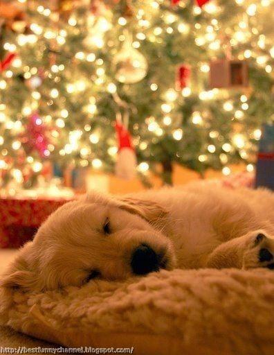 Cute Christmas dog.