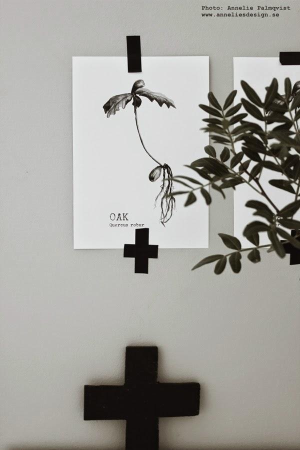 gröna växter, kvistar av grönt i inredningen, tavlor webbutik, svartvita posters, svartvit tavla, kors, svart, grått, inredning, inredningsdetaljer, på väggen, ekollon, oak print, prints, konst