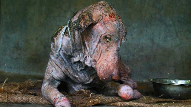 This Dog Goes Through AMAZING Transformation! You Won't Believe What He Looks Like Now!