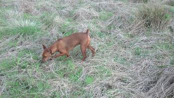 Foxy hunting
