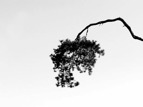 Graphic Art in Nature 2 - black and white photography