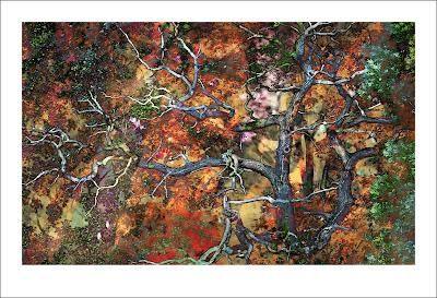 marcin barysz - drzewo wiadomości