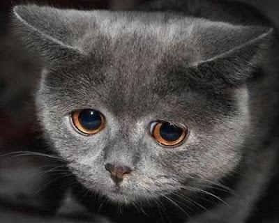 Trist kat