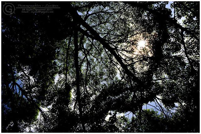 Photograph Tree