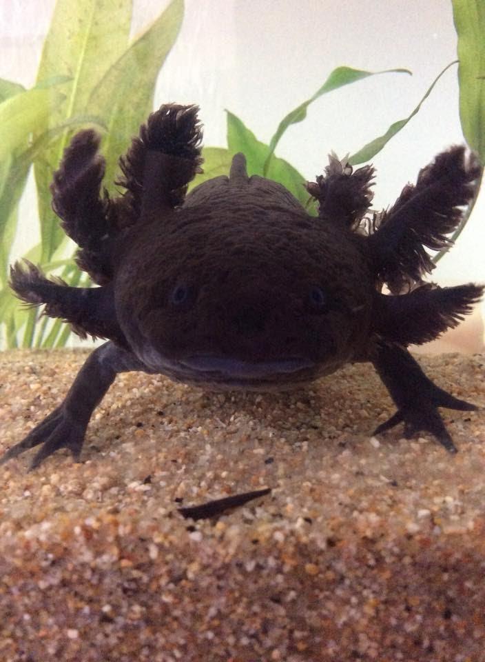 12 Interesting Amphibians  ThoughtCo