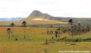 Minha homenagem ao Cerrado