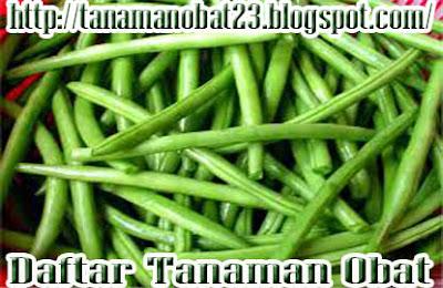 Manfaat Dan Khasiat Tanaman Buncis (Phaseolus vulgaris L.)