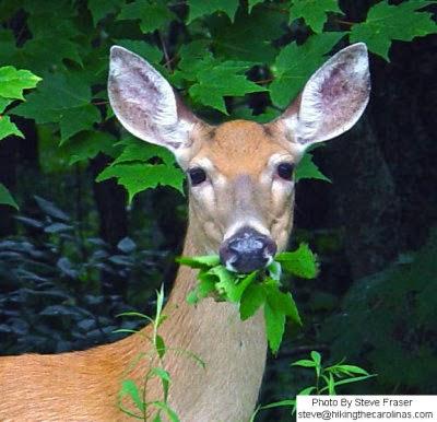 Herbivore Eating Mrs. Remis' Science Bl...