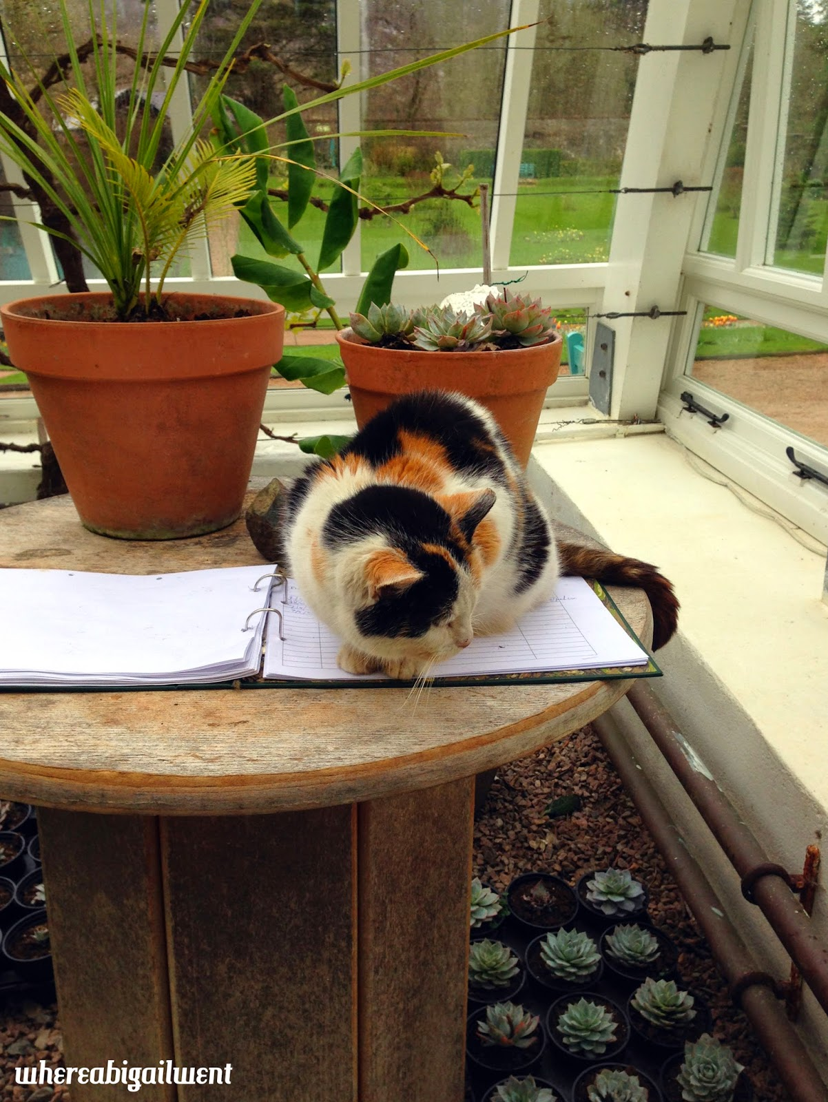 Greenhouse Cat Kylemore Abbey