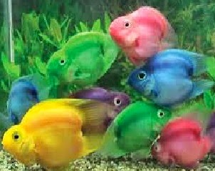 أسماك الزينة -تصنيع طعام أسماك الزينة - مشروع