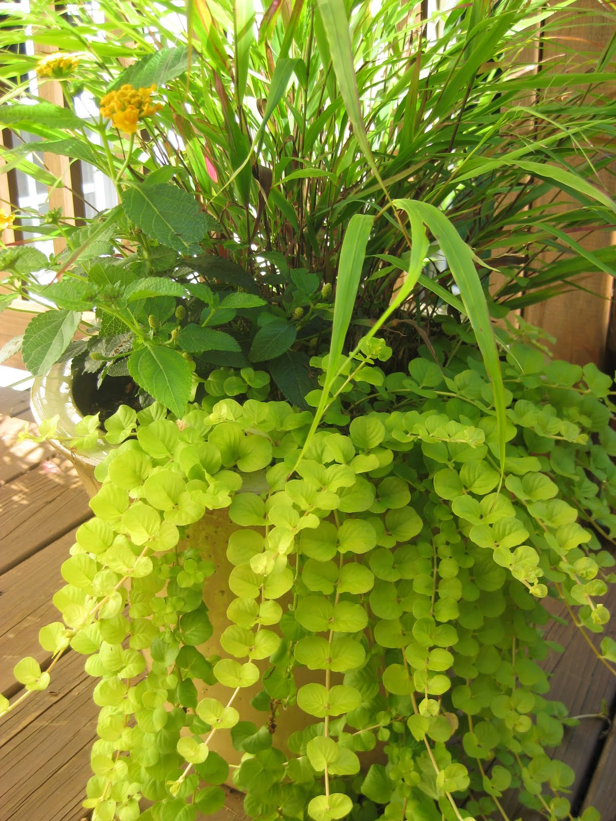 grow great grub organic food from small spaces pdf