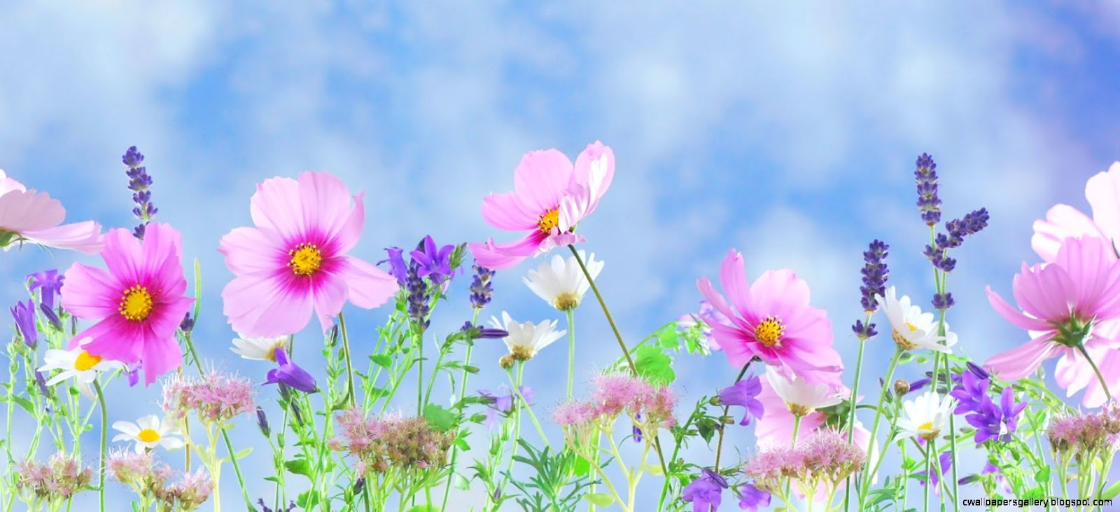 43 Spring Flowers Wallpapers ID8181