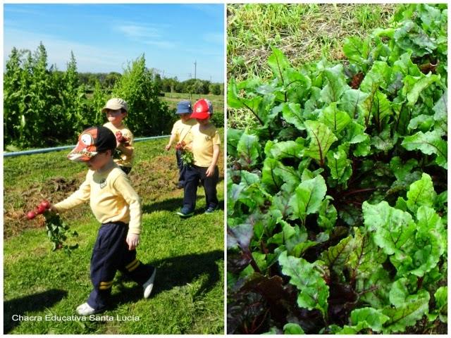 Alumnos cosechando rabanitos - Chacra Educativa Santa Lucía