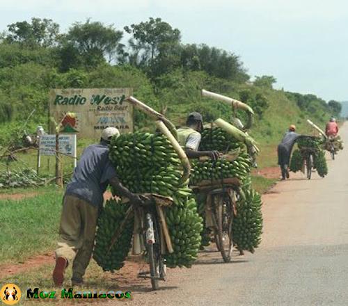 Bicicleta de Bananas