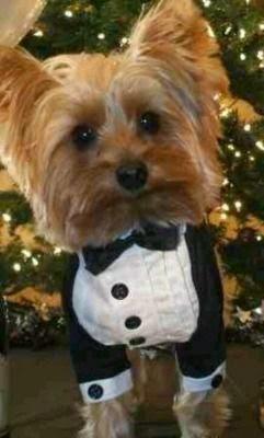 Vida de cão de luxo - roupa  acessorios para cães