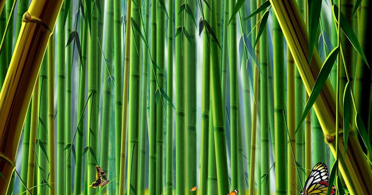 All New Wallpaper Bamboo Forest Hd Desktop Wallpaper