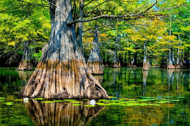 5 Unmissable Louisiana Adventures Yes And Yes