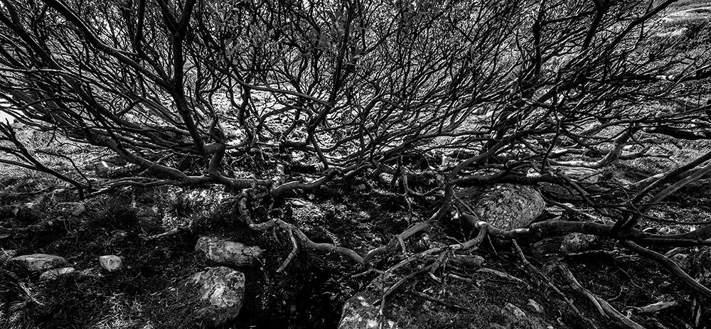 Vierkratt, Rondane. Sort hvitt, Øyvind Buljo