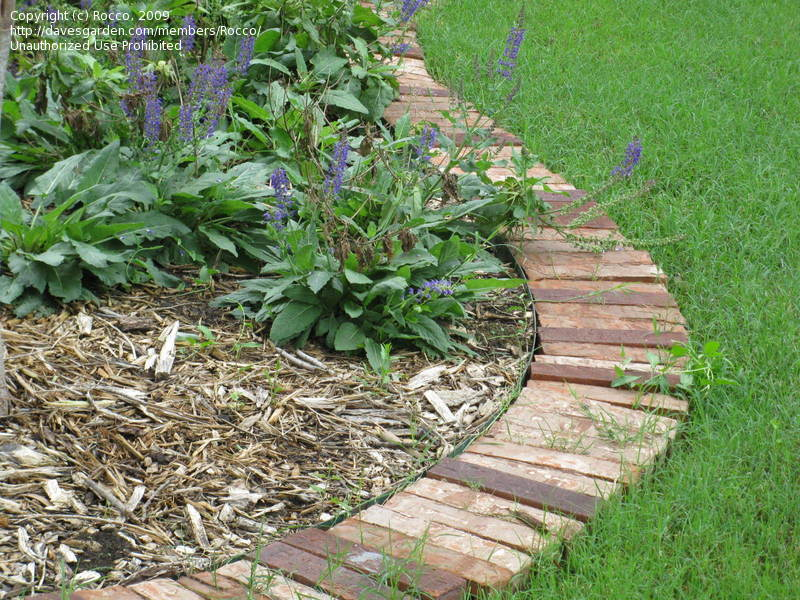Brick laminate picture brick garden edging for Brique pour bordure de jardin