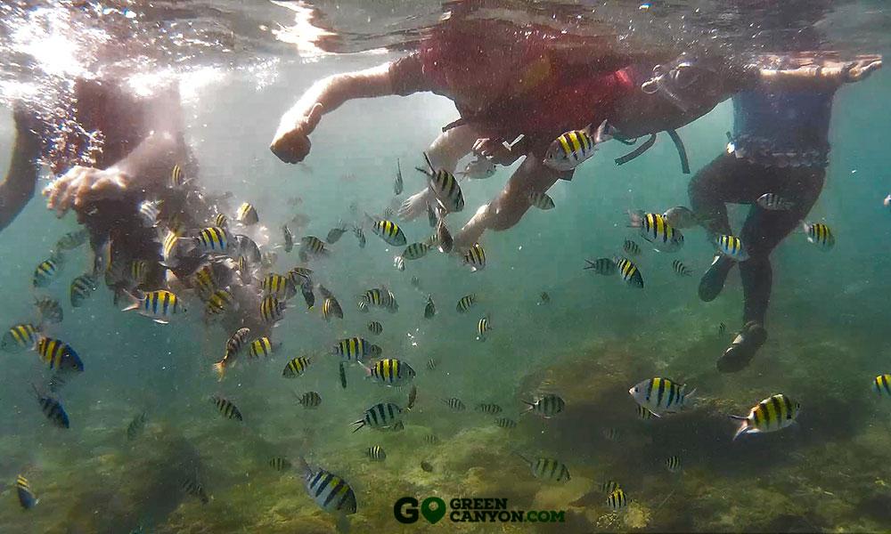 Snorkeling di Taman Laut Pangandaran Wisata Green Canyon