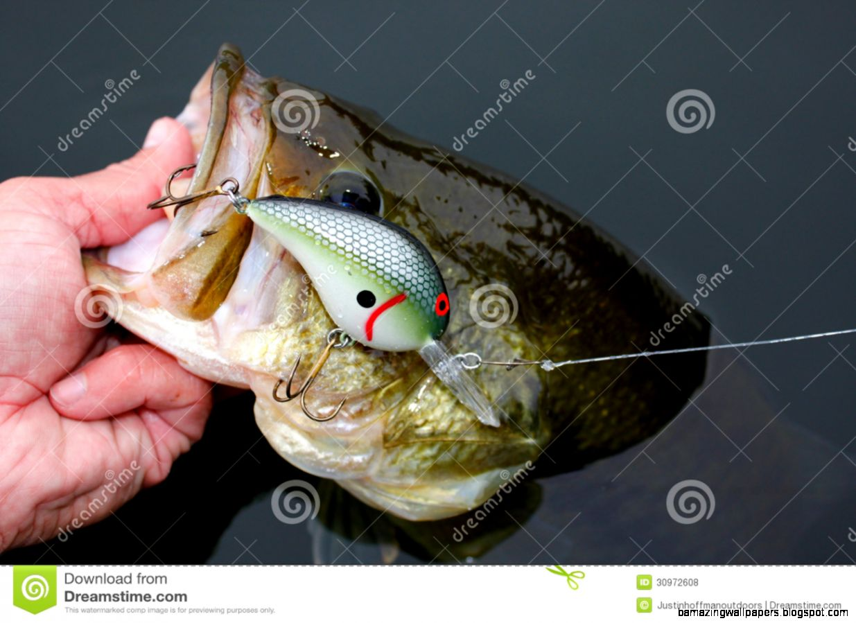 Largemouth bass fishing amazing wallpapers for Largemouth bass fishing lures