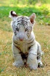 Mas animales de la selva