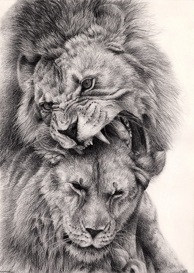 Pencil Drawings By Bengtern