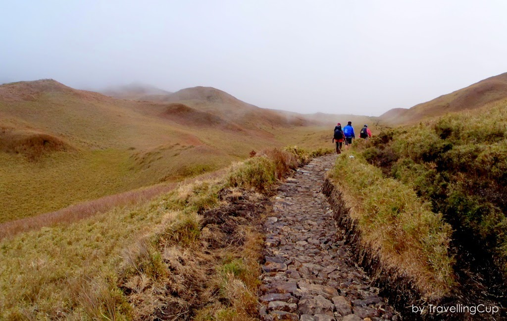 Trail in Mt. Pulag